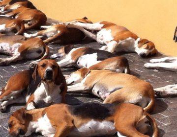 Lovečtí psi